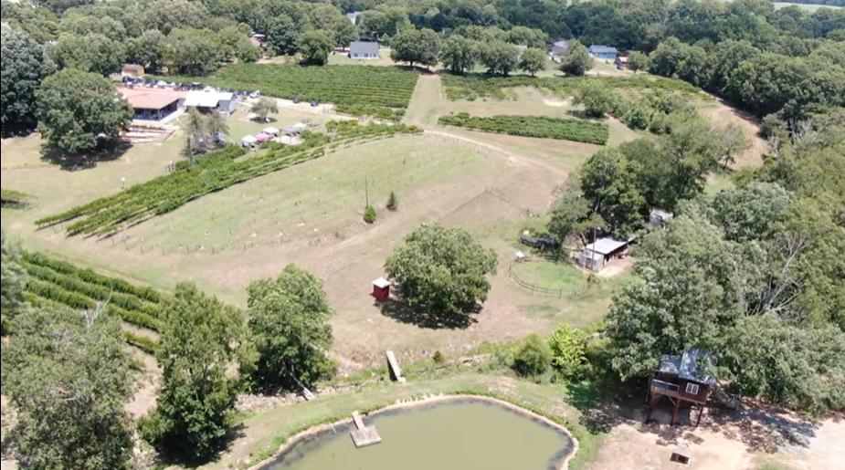 Treehouse vineyards in Monroe